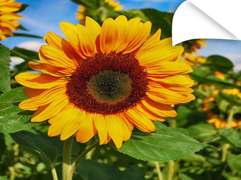 solvoprint_photo_paper_200_glossy_800x600.jpg